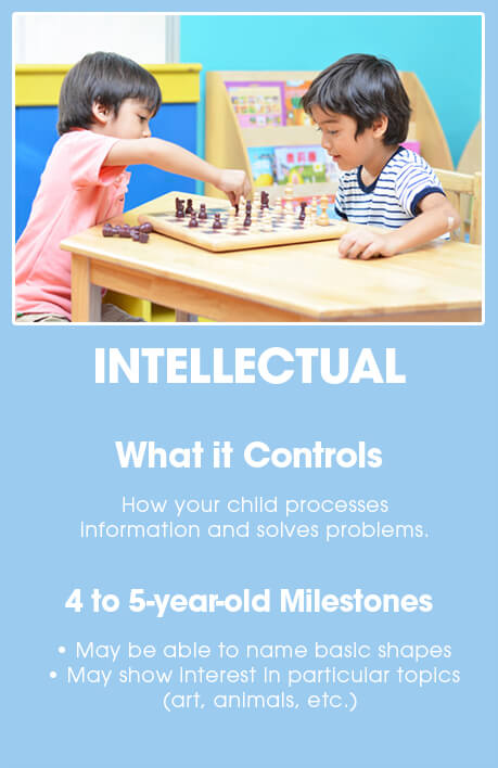 4-5 year old brain development: INTELLECTUAL